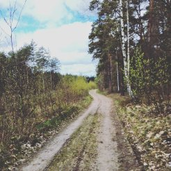 Podlaskie łąki i lasy